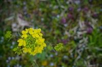 野の花は宮古でも撮れるってば。